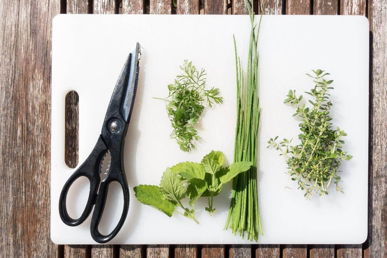 Guna Herbal
